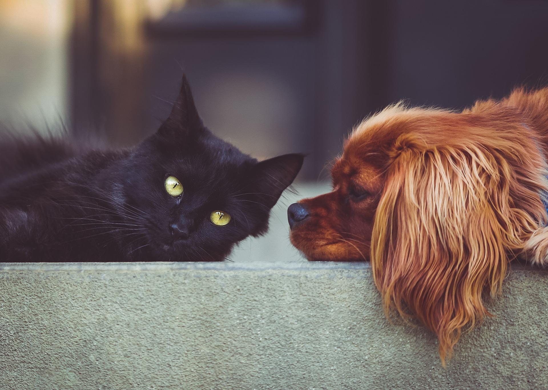 猫と犬が向かい合う画像